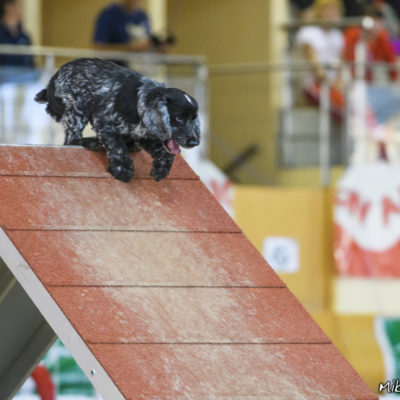 IFCS World Agility Championships 2017 - Agility-Standard – Bia